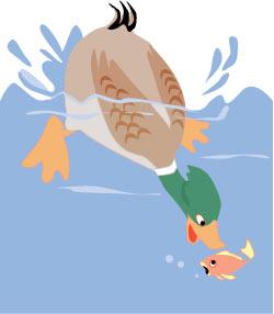 Duck-Catching-Fish-1